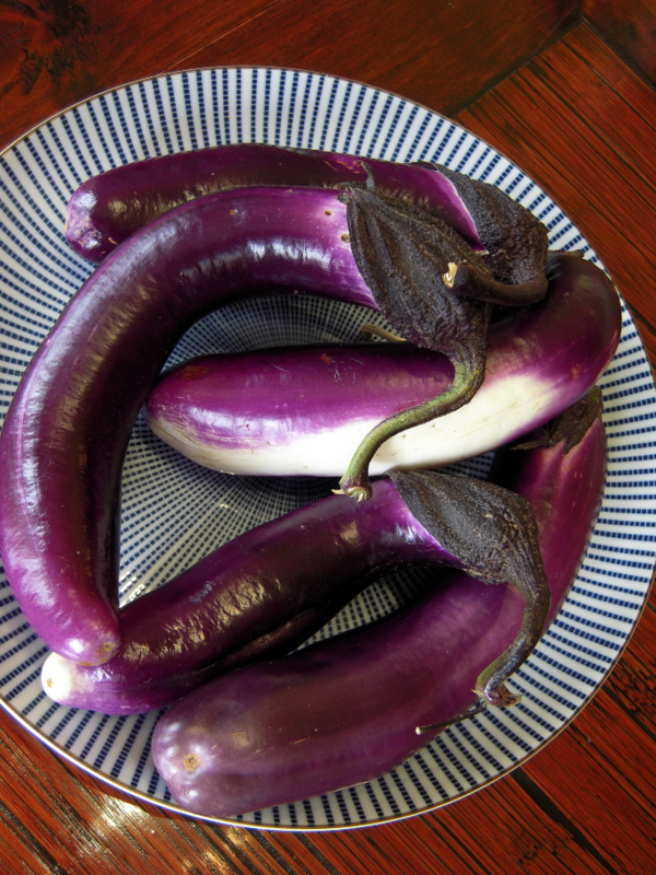 fresh Chinese eggplant
