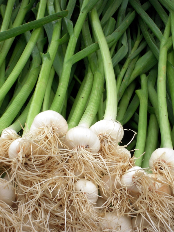exotic spring onions