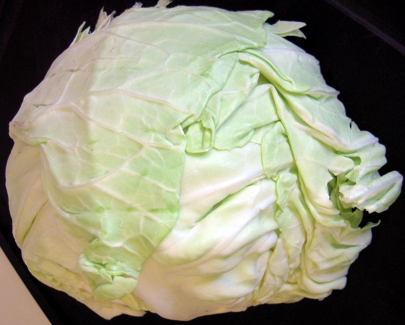 perfect green cabbage for salad