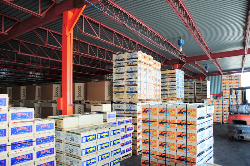 Riverview Produce warehouse packed full of California grapes