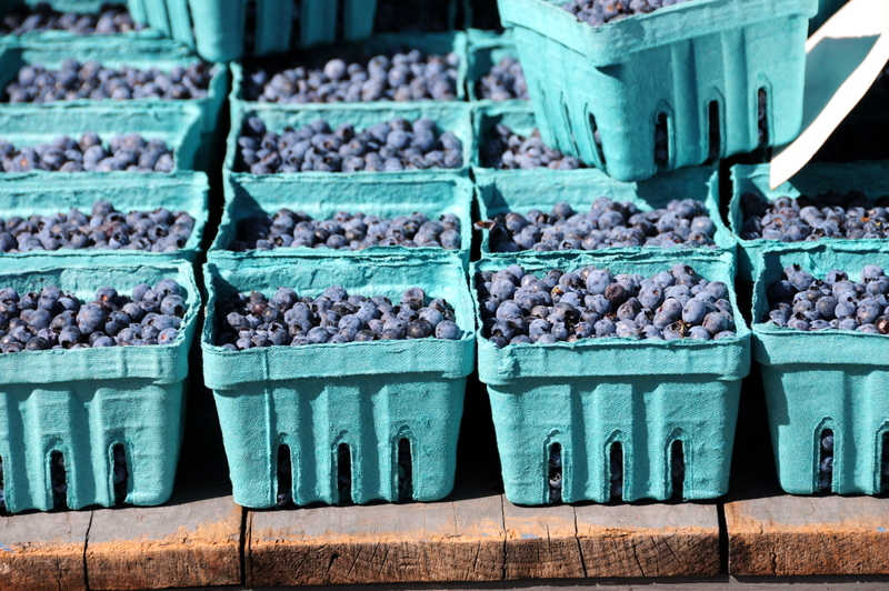 blueberries at St. Lawrence farmers market