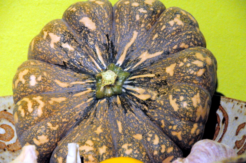 beautiful winter squash from Alemany farmers market
