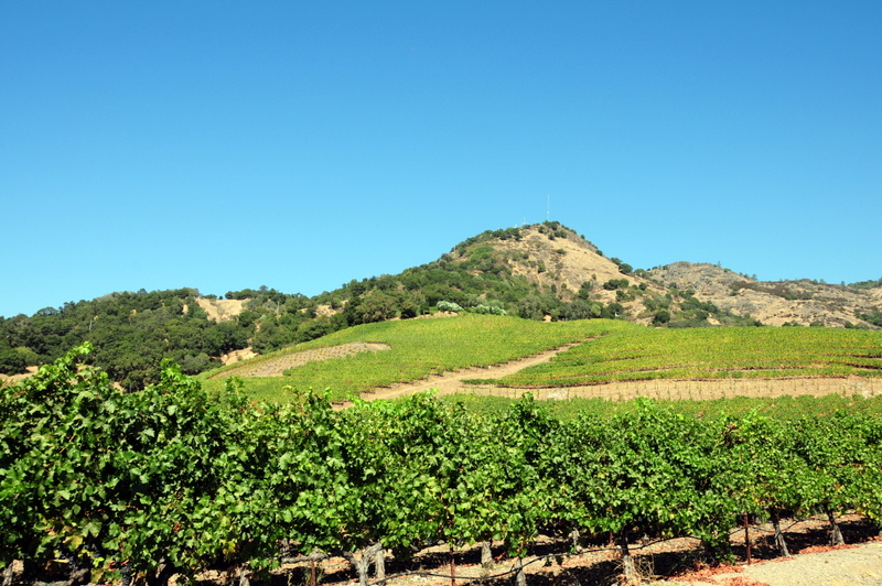 some Shafer vineyards growing on the hillside around the property