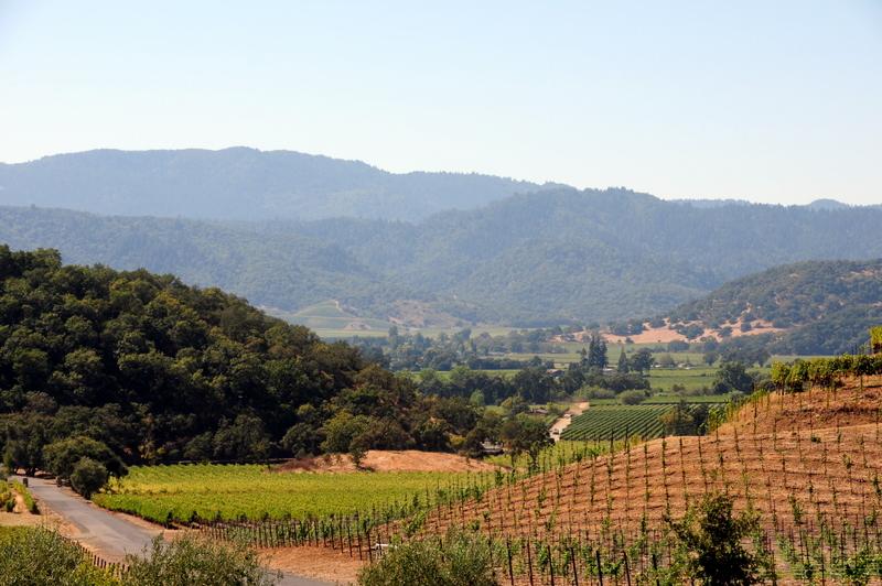 view of the Mayacamas Range and Silverado Trail from Shafer