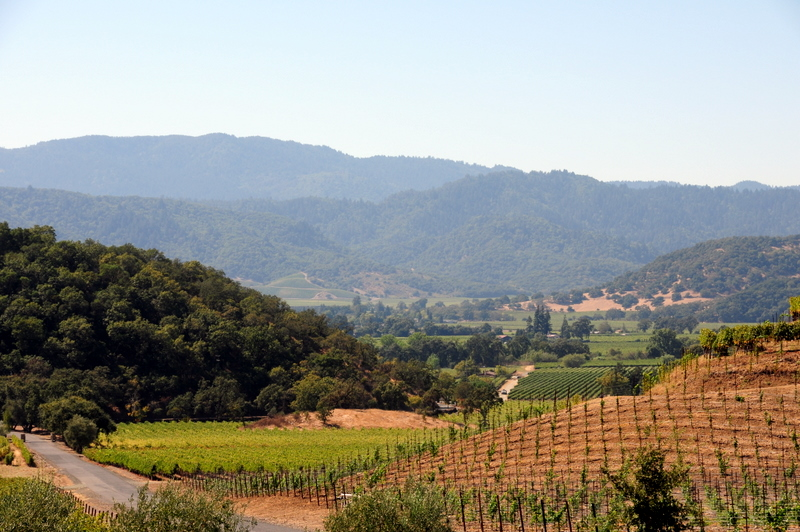 view of the Mayacamas Range and Silverado Trail from Shafer