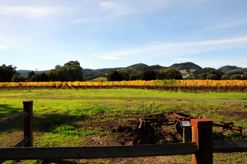 some Trefethen vineyards in fall