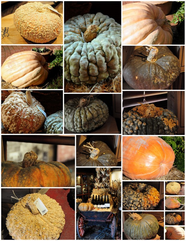 unusual pumpkins and Squashes