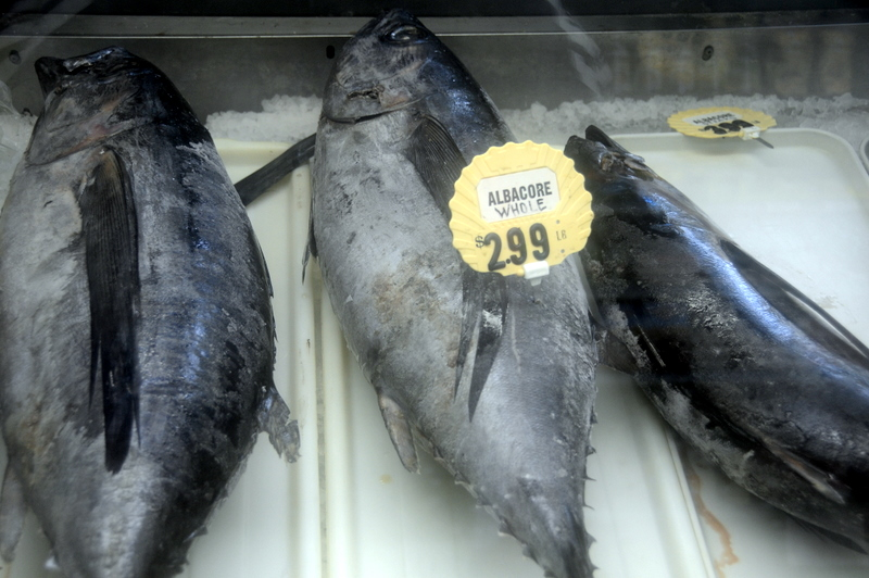 fresh whole albacore for sale