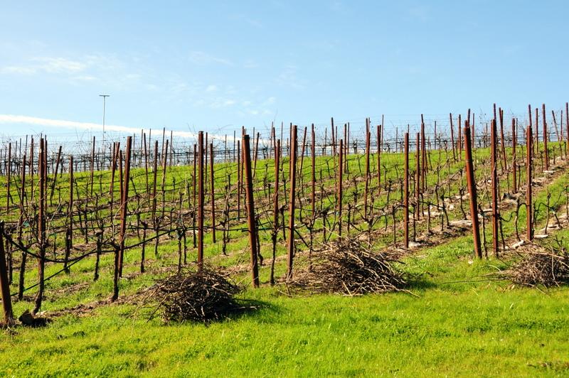 Michel-Schlumberger pinot noir vineyard