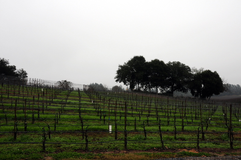 an elegantly moody vineyard view from Merry Edwards