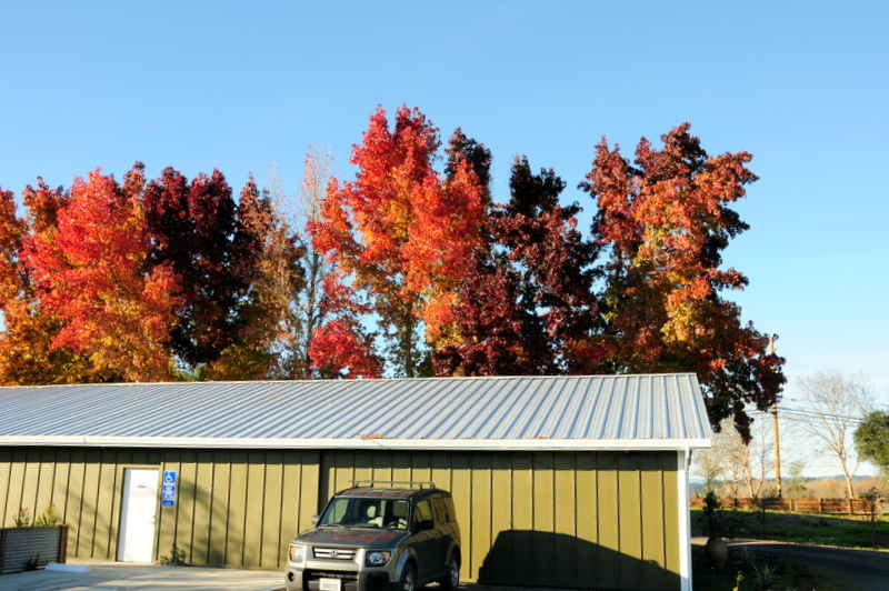 gorgeous fall foliage at DaVero
