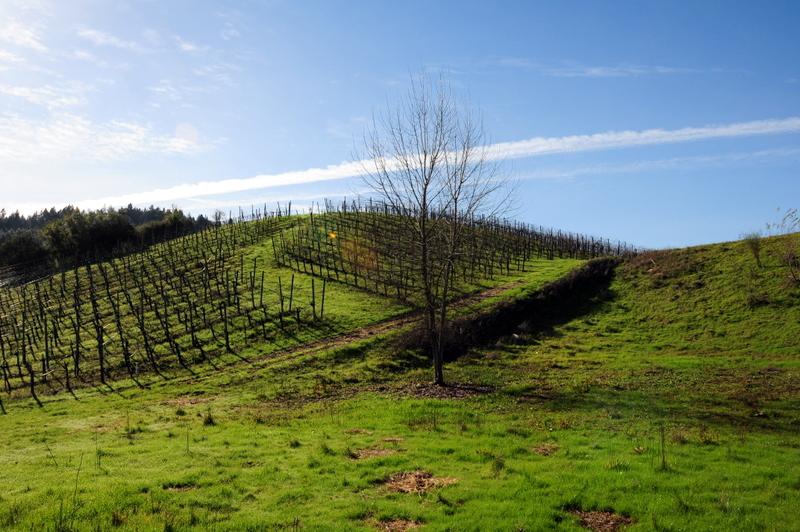 pretty vineyard at Michel-Schlumberger