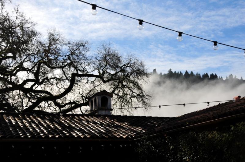 romantic morning fog behind Michel-Schlumberger visitors center