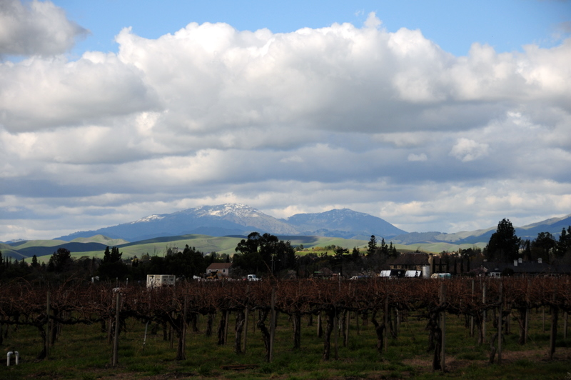 Concannon Vineyard with a snow-capped peak in the background