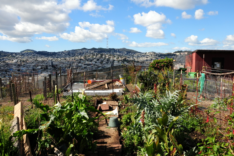 view from the community garden across the Mission neighborhood to Twin Peaks and the Sutro Tower