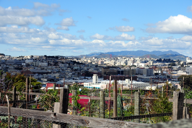 view from the community garden all the way to the Marin Headlands.  Can you see the tips of the Golden Gate Bridge