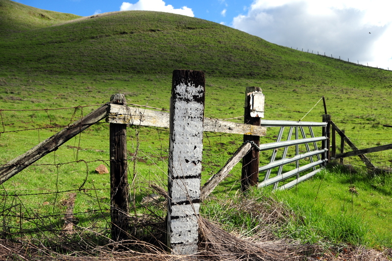 emerald green hills in the California spring