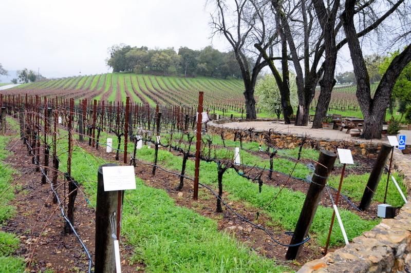 some more enchanting vineyards at JUSTIN