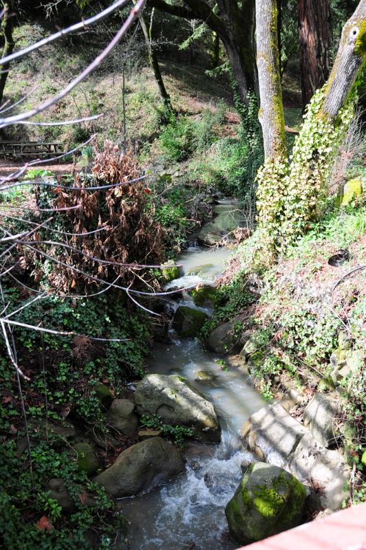 tiny creek running through Chouinard Vineyards