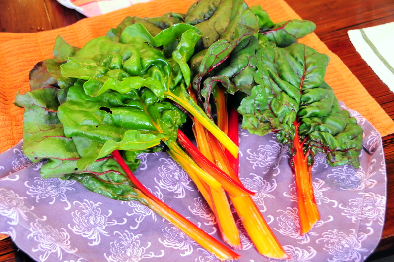 fresh rainbow Swiss chard from my community garden plot