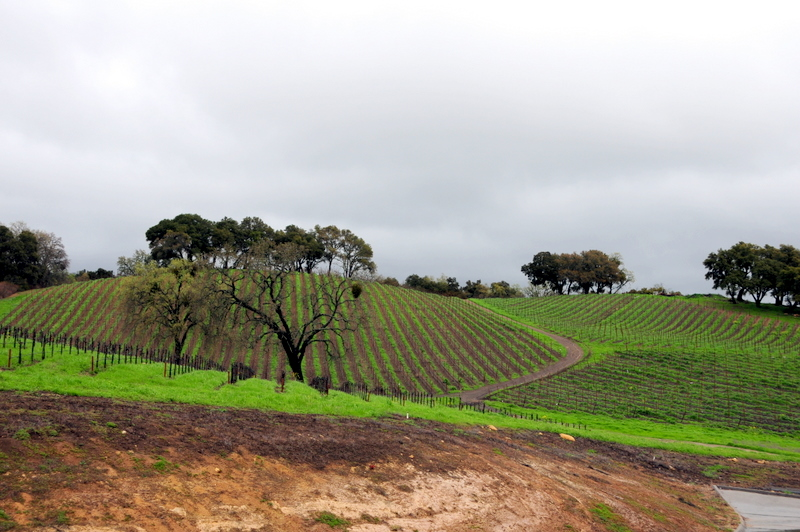 some of the Denner Vineyards