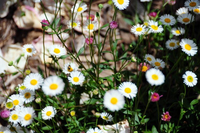 cheery springtime flowers