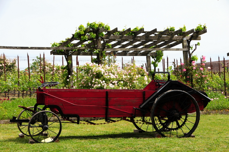 gardens with old carriage at Martinelli Winery