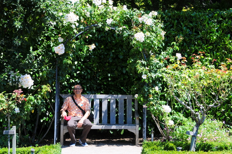 relaxing in the Rose Garden