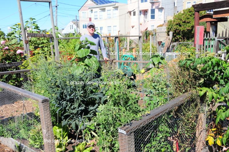 our community garden plot