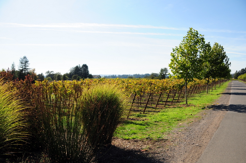 DeLoach is converting all their viticulture to organic and biodynamic practices