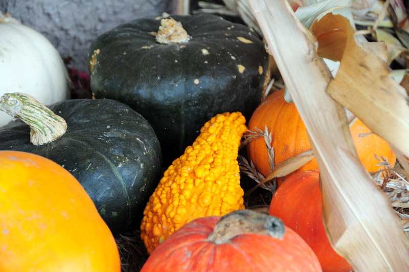 colorful gourds brighten up Littorai in the autumn rain