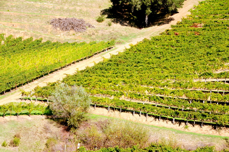 these vineyards almost look like the makings of an abstract painting
