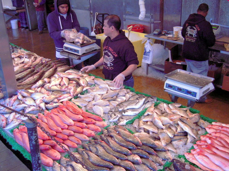 numerous kinds of fish