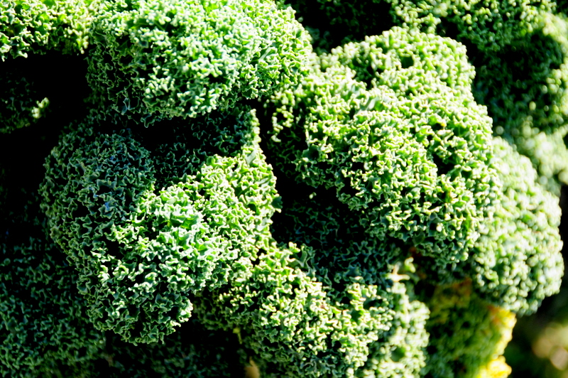 fluffy greens close up