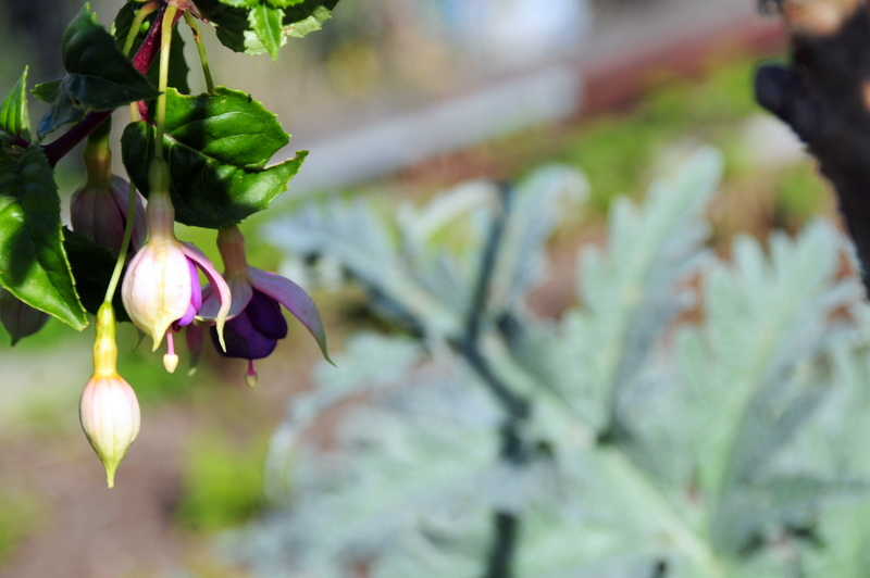 pretty flowers from a neighbor's garden