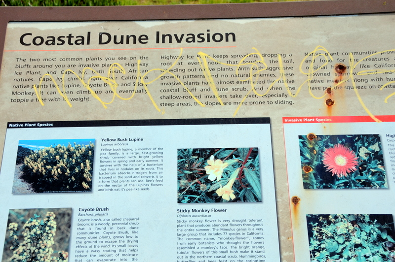 Coastal Dune Invasion