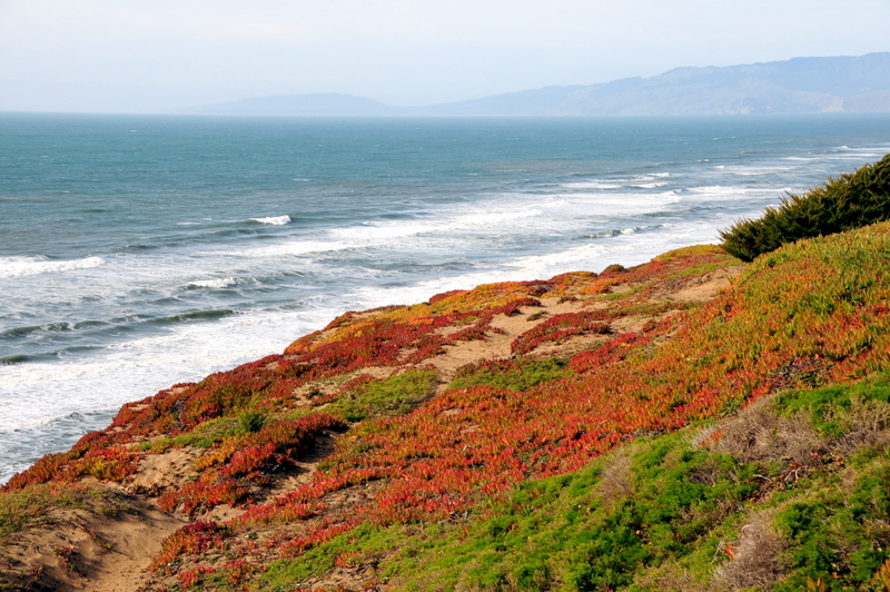 colorful Highway Ice Plant along the coast