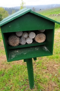 carpenter bee hives