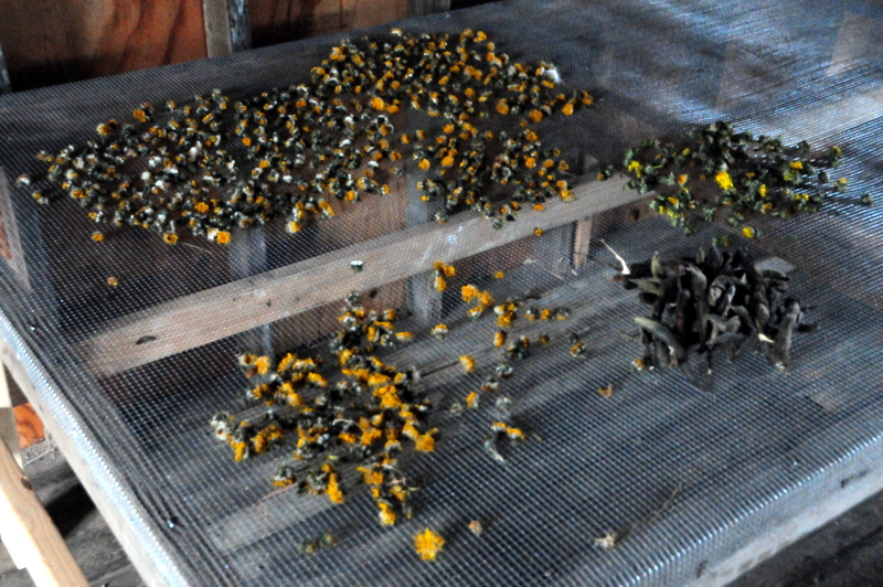 chamomile on a drying rack
