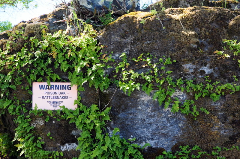 we saw several of these warning poison oak rattlesanke signs thorughout the winery