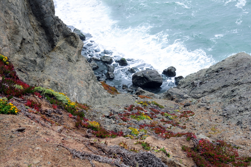 amazing plants hugging the sheer rock