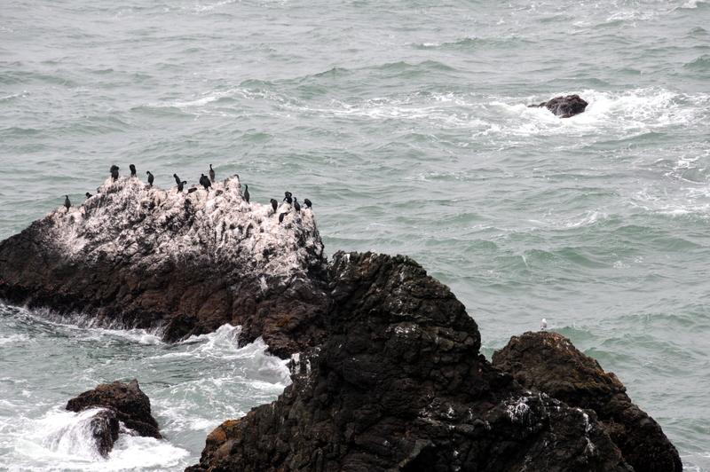 cormorant haven