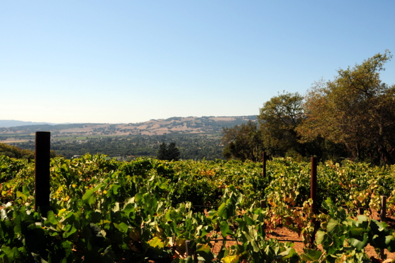 view across the valley from the first Hanzell estate vineyard