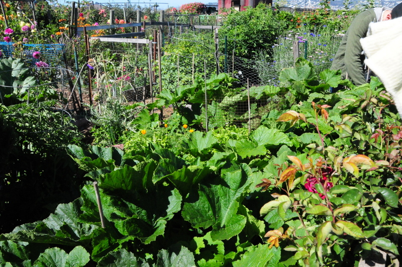 Vegetable Garden Spring 2013